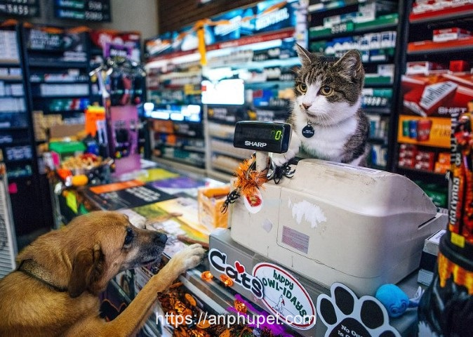 shop cho cung an phu pet