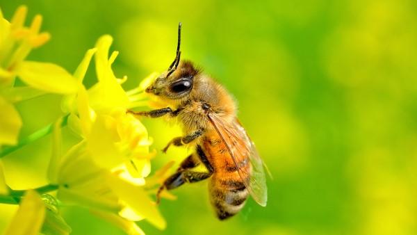 con ong dac diem