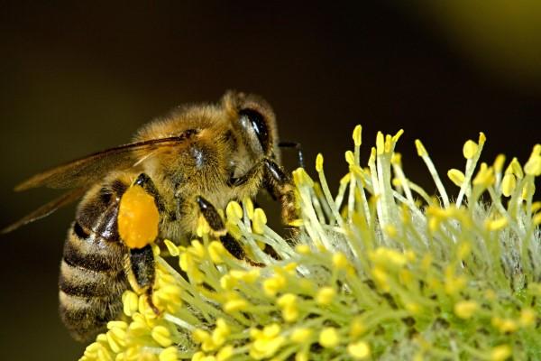 con ong hut mat hoa