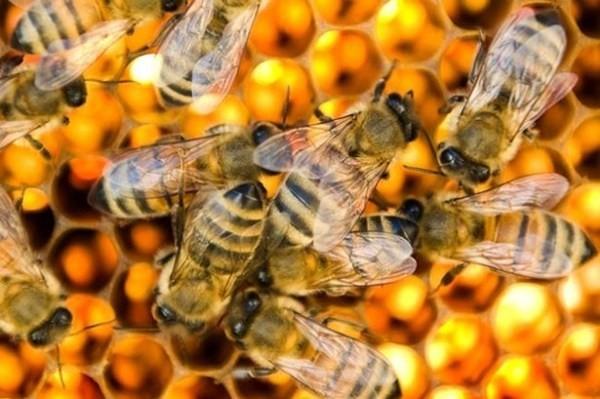 con ong mat